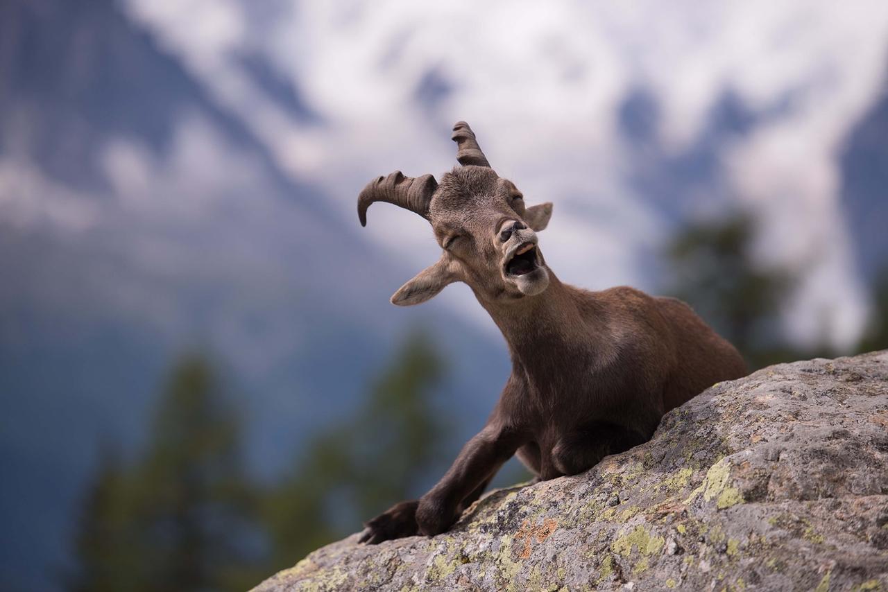 самое крутое животное фото