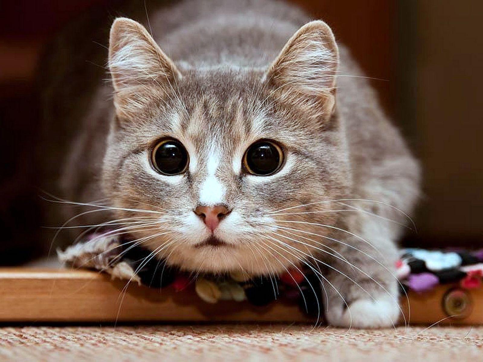 Сайт с картинкой котика