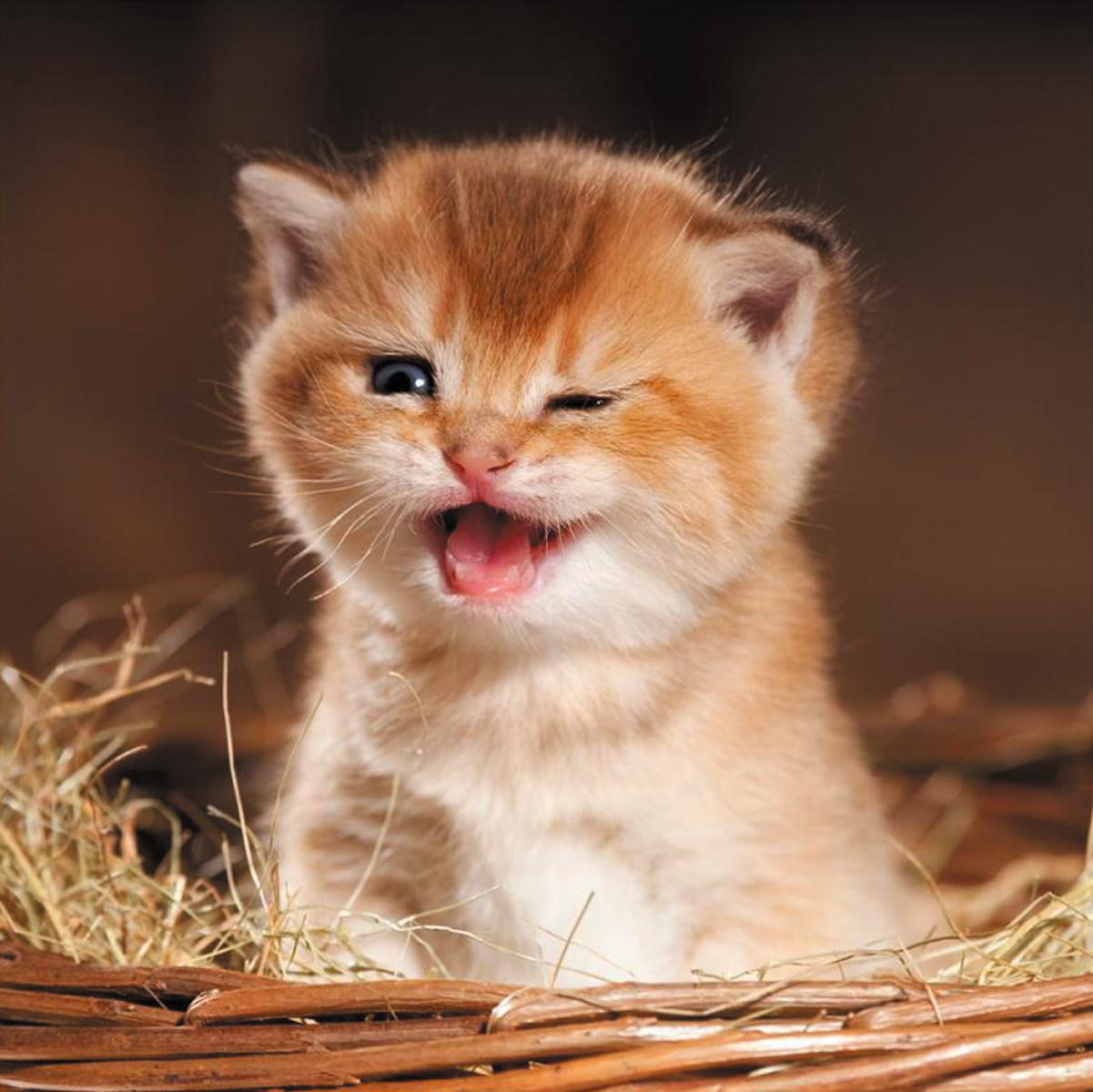 Картинки с котятами прикольные фото