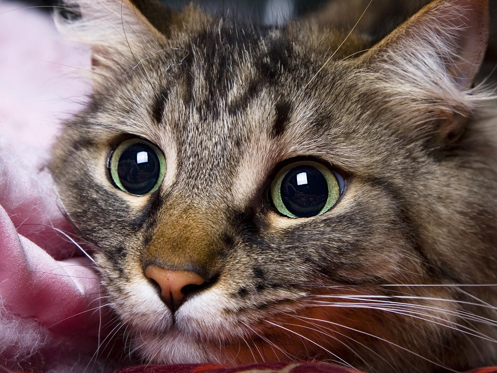 Картинки котов высокого качества