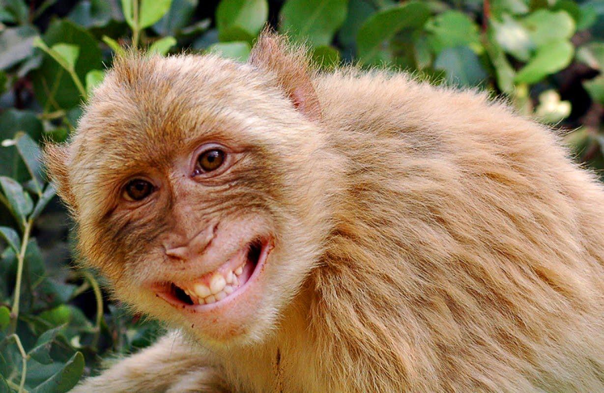 картинки смеющихся зверей благоприятных условиях мшистый