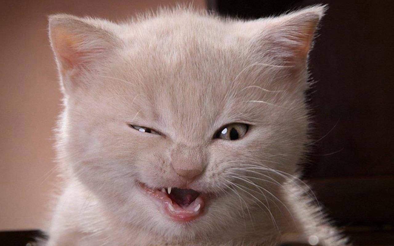 фотографии смешные картинки на тему котов что она