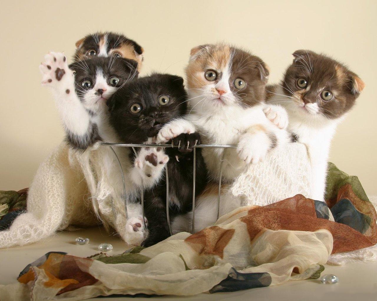 Красивые картинки с веселыми котятами размеры подбирают
