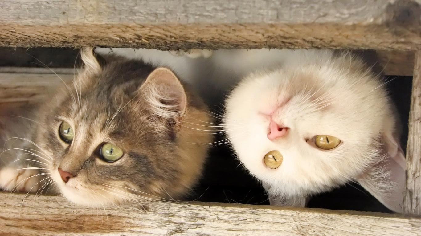 Картинки с котятами с надписью все будет хорошо