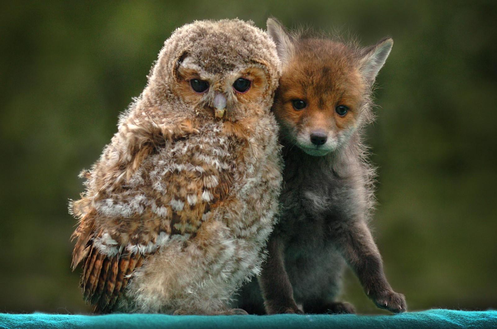 чудесные животные фото