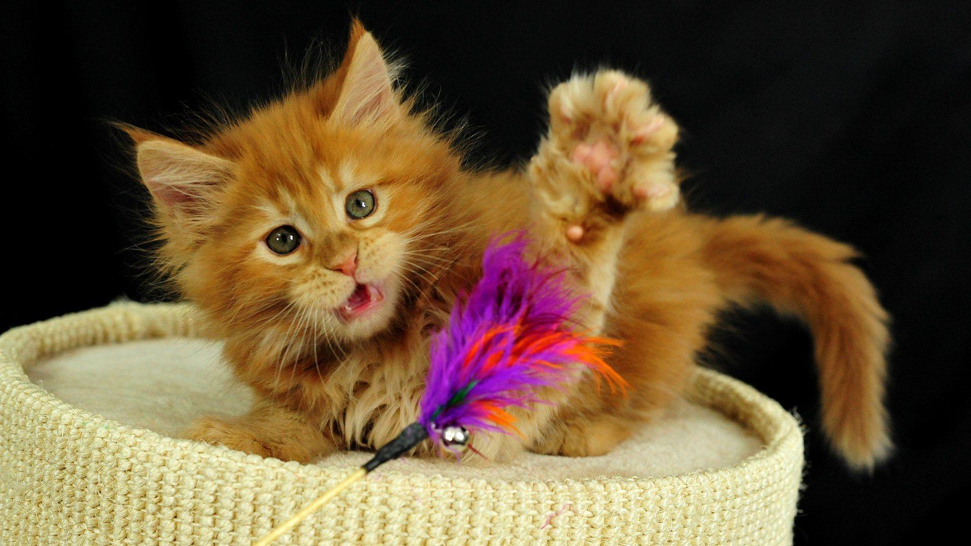Картинки озорных котят