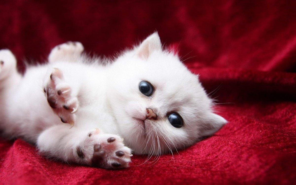 картинки прекрасных котят