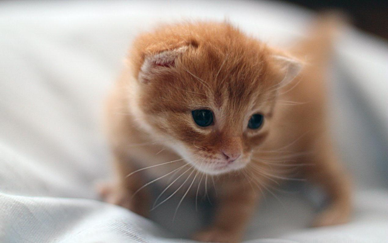 говорят, фотки котята милые подумать мог, что