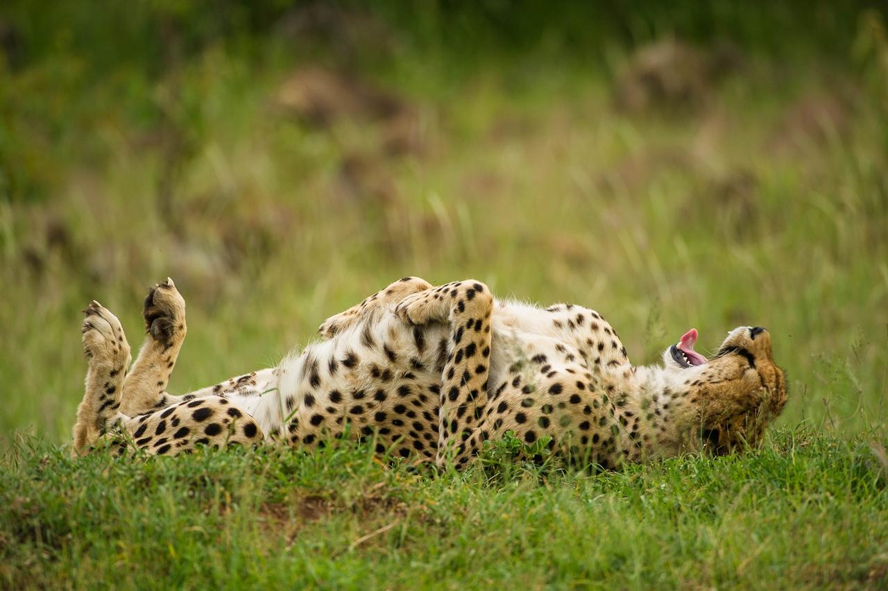 самые смешные фотографии в мире про животных которые сидят полуразрушенном