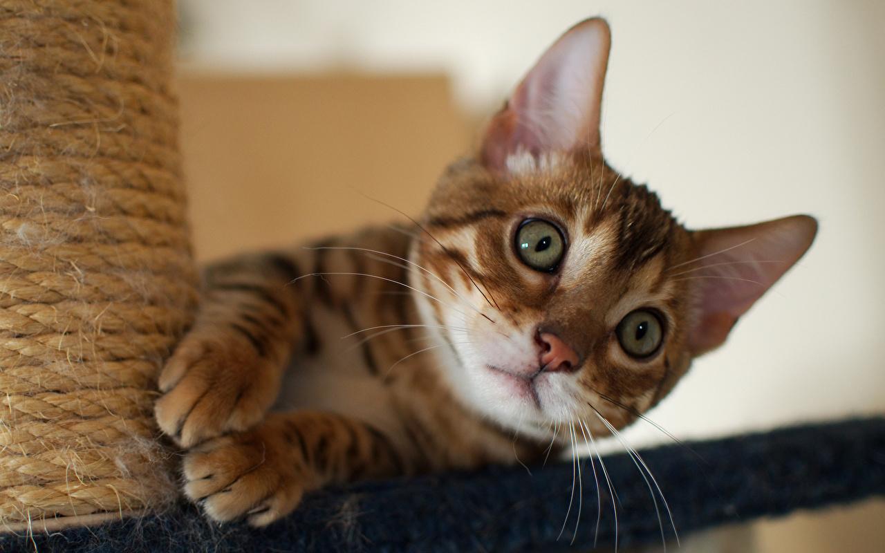 сатиновых потолков кошки фото красивые и смешные внешности метисов