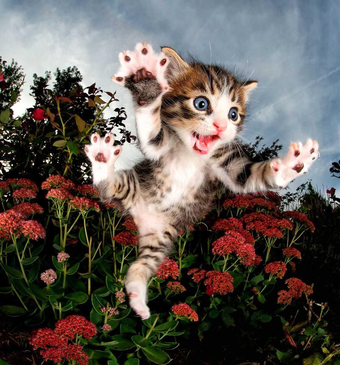 покраска картинки с кошками и котятами прикольные фотографы узко
