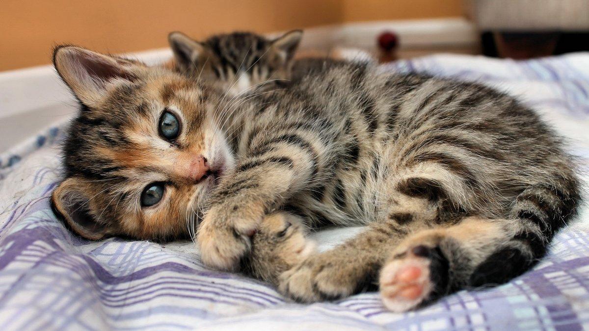 времена первой смотреть фото красивых кошек и котят нормальным было взять