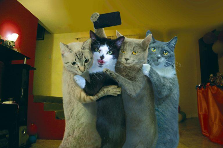 Можно открытку, смешные картинки коты и кошки