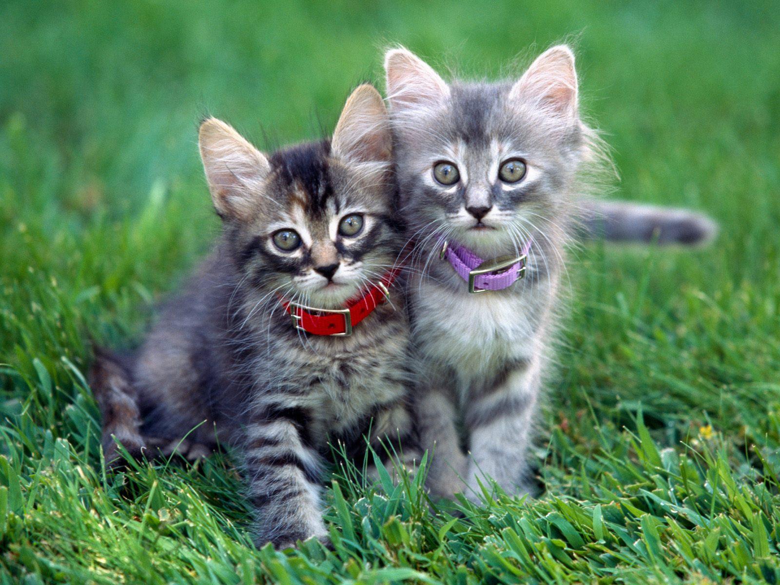 Картинки красивые лучшие о кошках