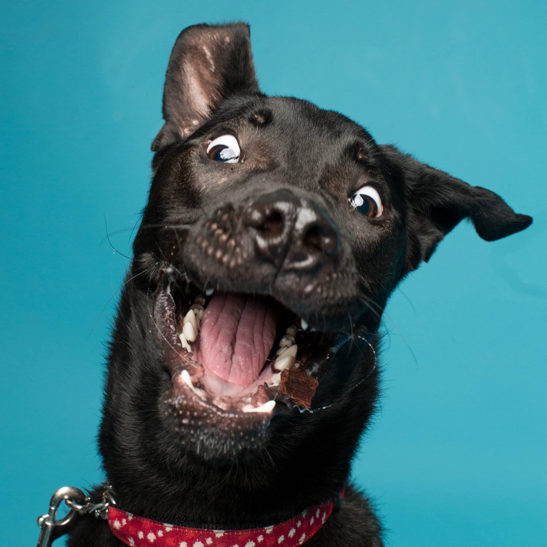 Бабочка, смешные картинки собак из вк