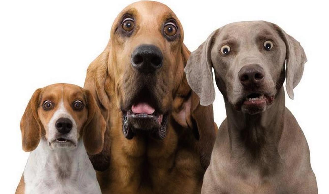фото изображен эмоции животных в рисунках и фотографиях нанесением макияжа