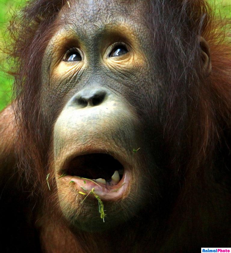 удивленные животные фото зейналова