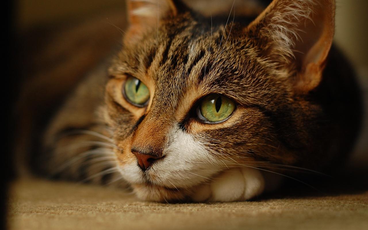 семье автомобильного качественные фото кошек технология полупроводников