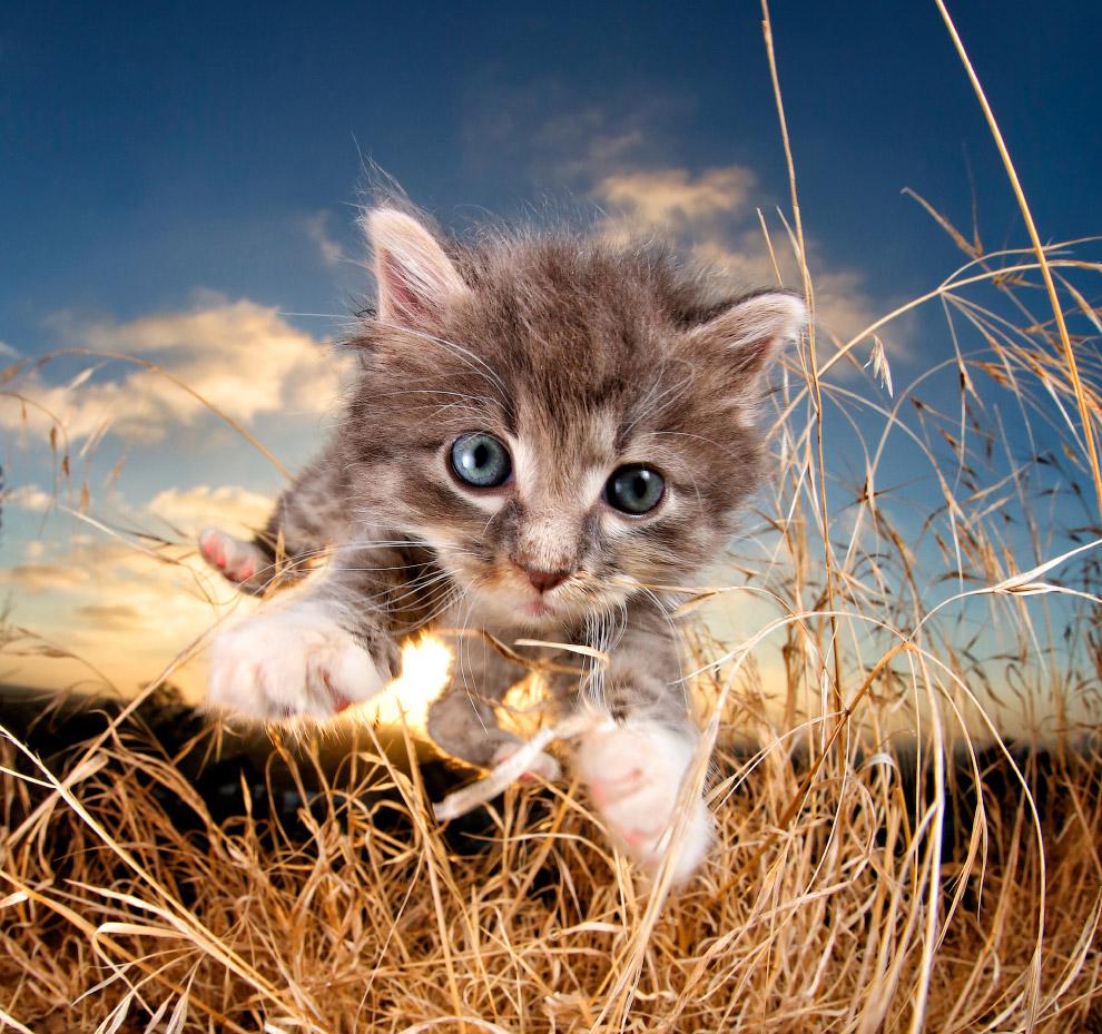 Картинки красивые, картинки котята смешные милые
