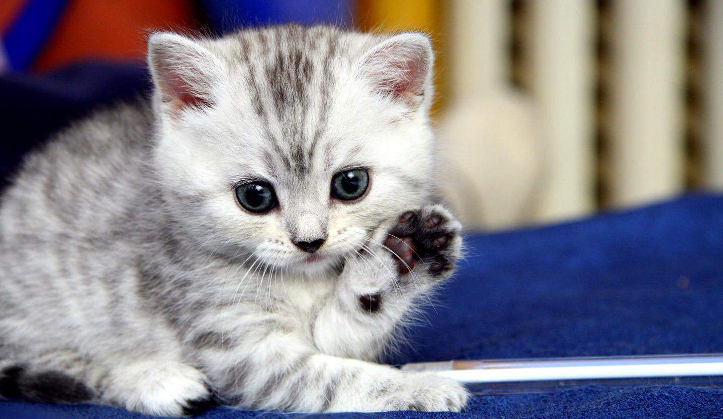 Котята картинки самые красивые