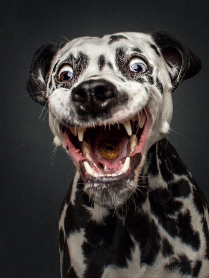 Картинки на аву животные веселые