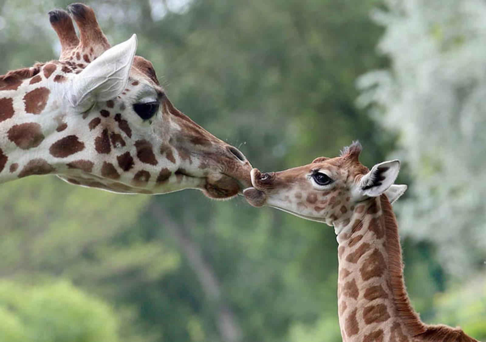 Все животные мира и их картинки
