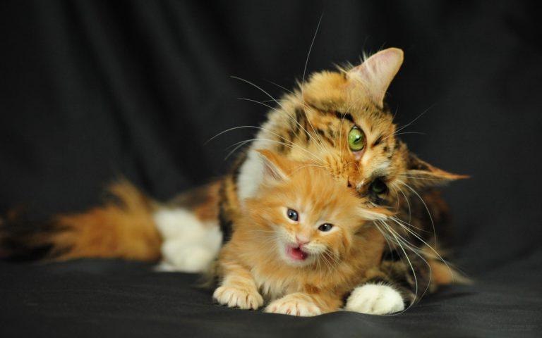 Картинки с котятами прикольные фото, футбольные