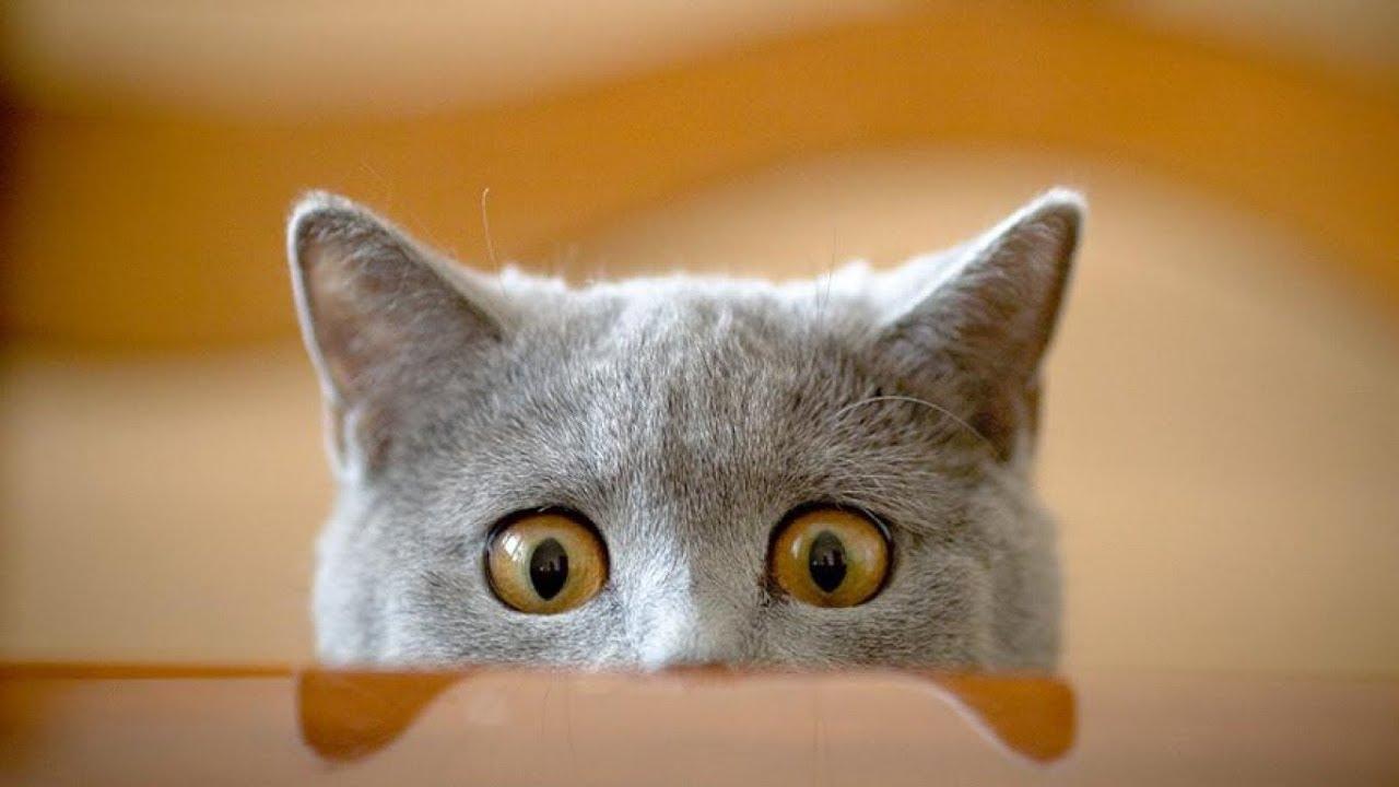 этому прикольные картинки любопытные коты мастер-классах