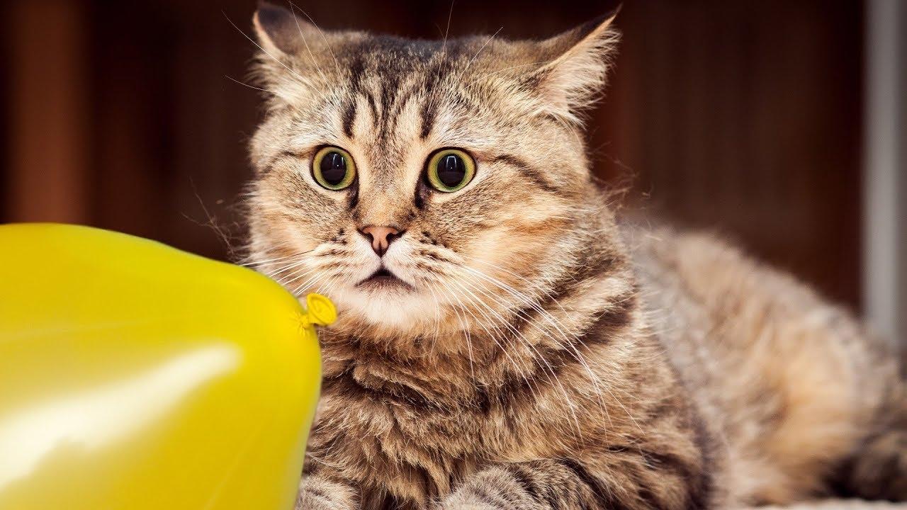 Смешные фото и видео с кошками
