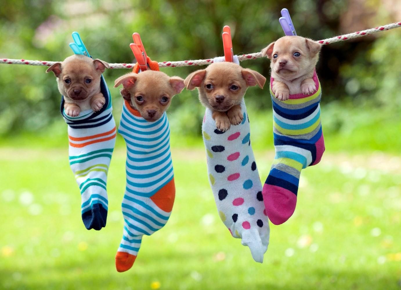 Днем рождения, прикольный картинки собачек