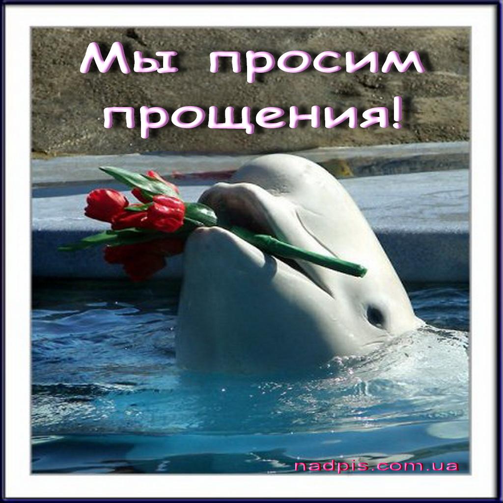 Днем рождения, с днем рождения картинка с дельфином