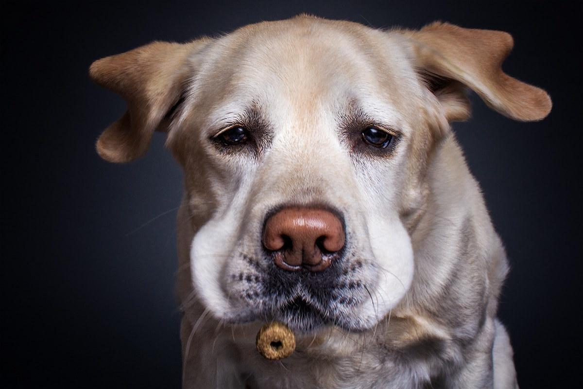 Учителю, собака фото смешное