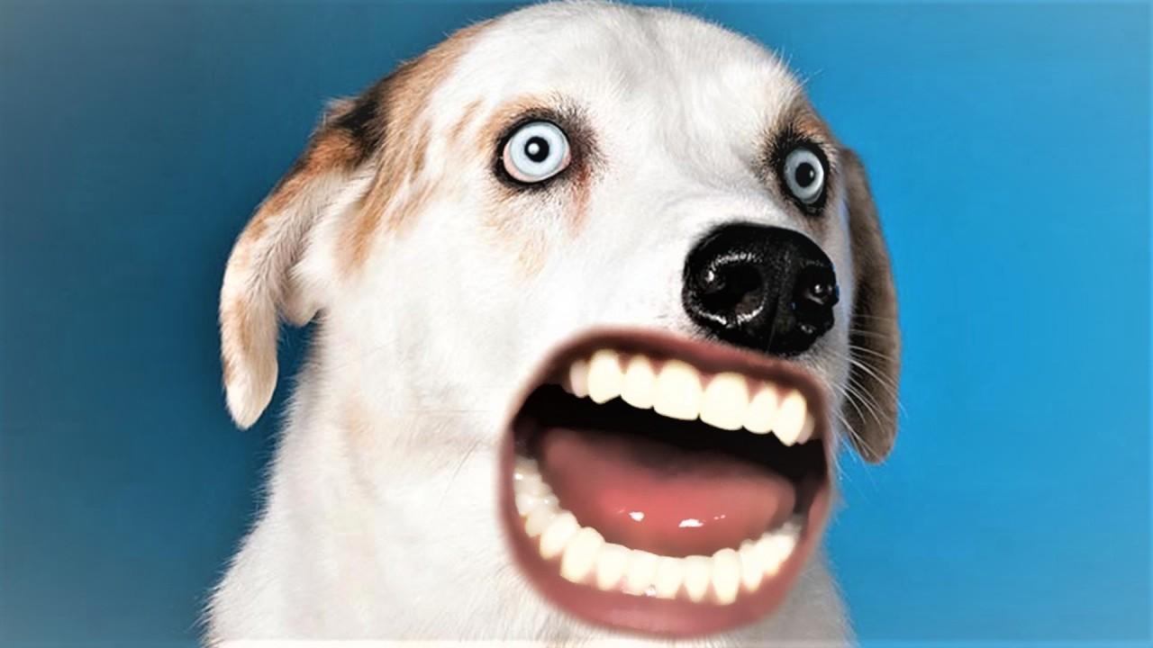 Открытка с собачкой с зубами человека, приятного