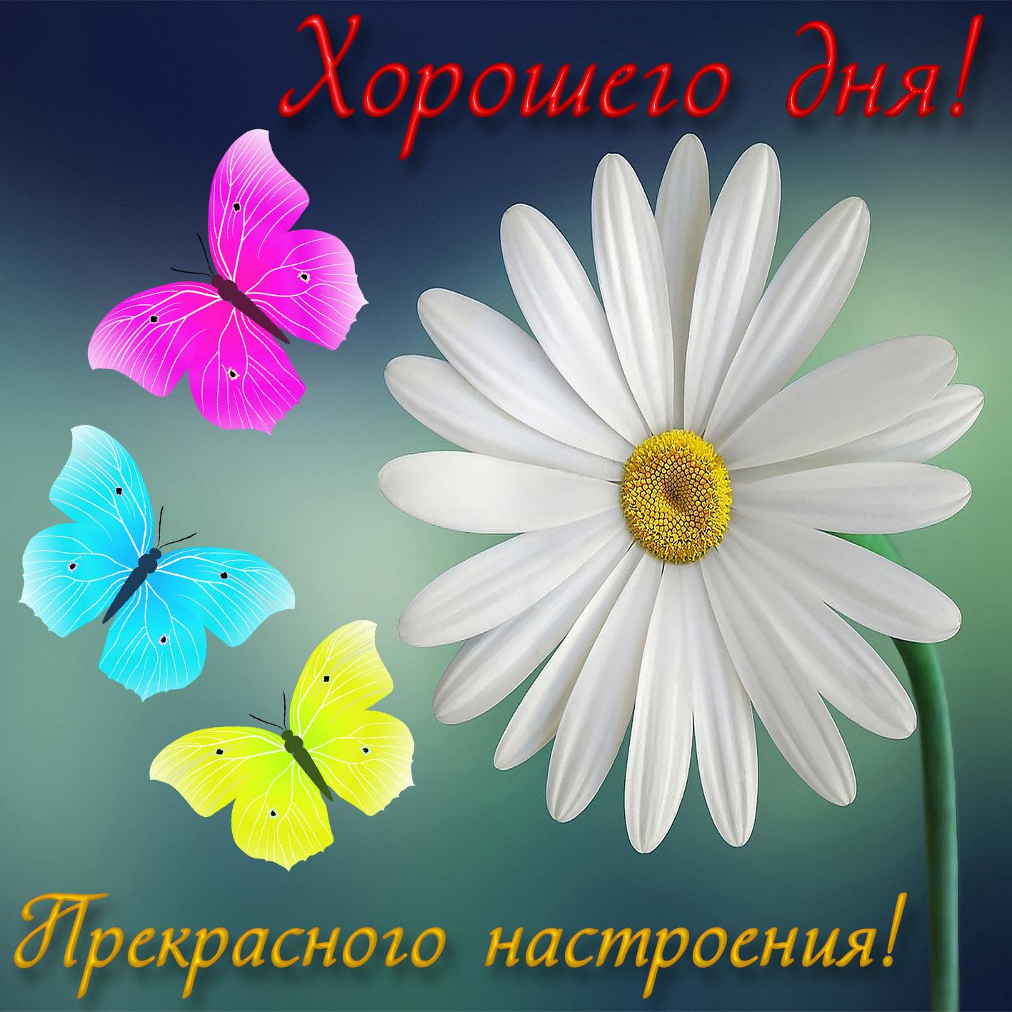 Картинки доброго дня и наилучшие пожелания