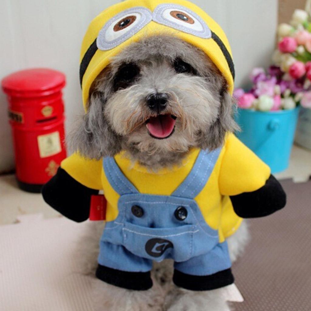 funny dog costumes - 736×736