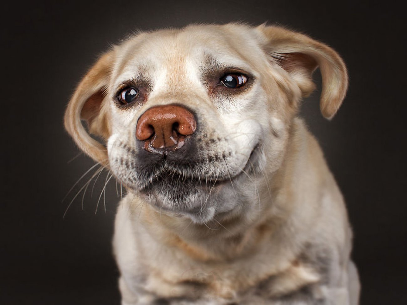 Днем, смешная прикольная собака картинки