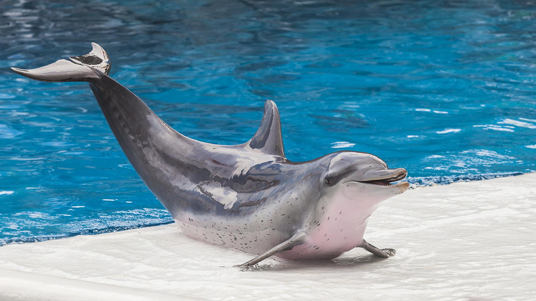 самые красивые дельфины в мире фото наших