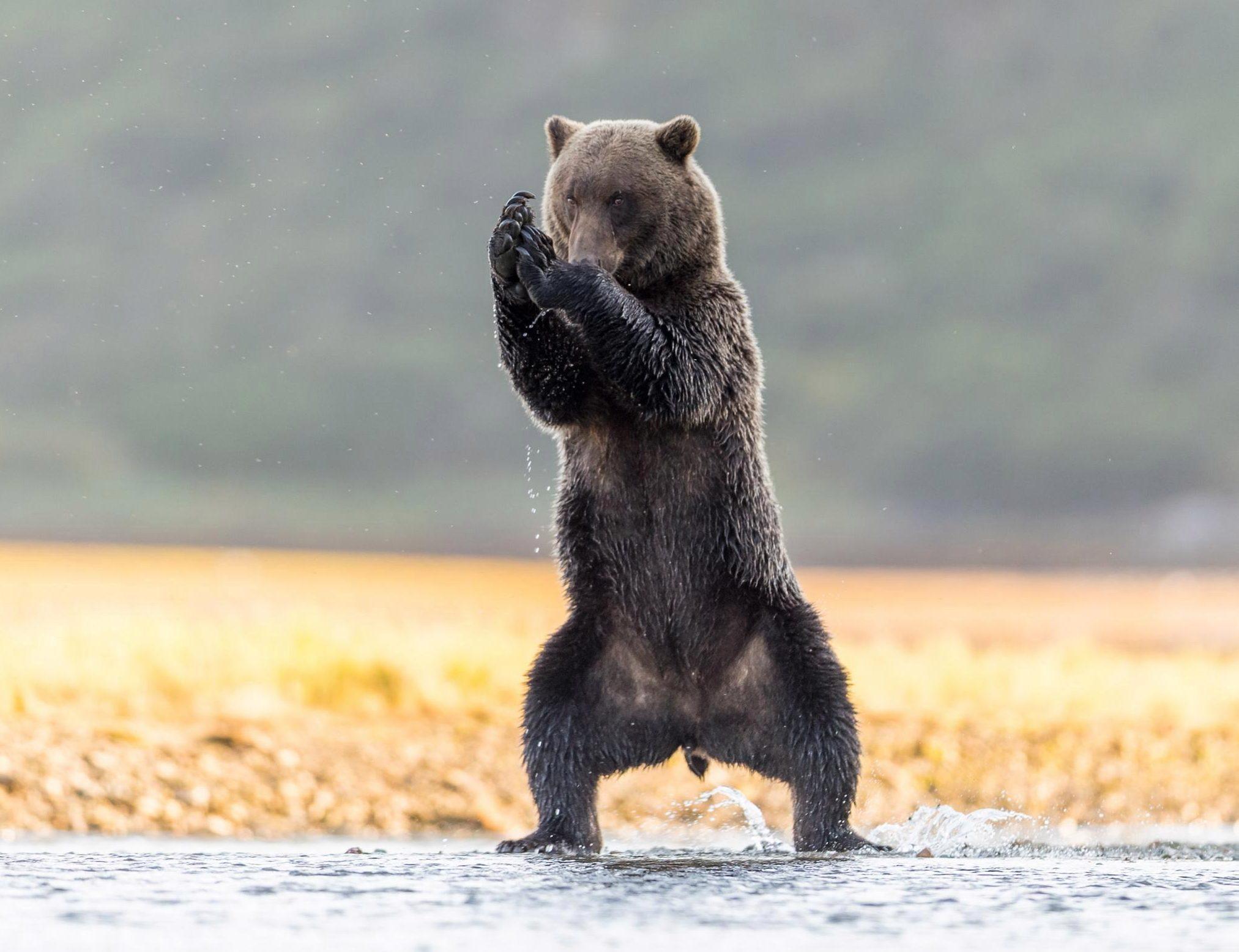 этой шкале фото приколы с медведями артисты организуют
