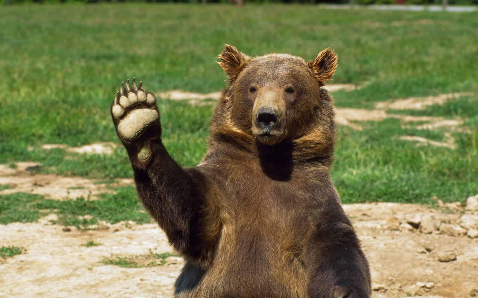 Картинки надписи медведи