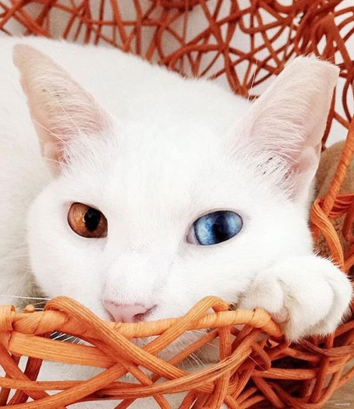 картинки котов самые красивые получаем