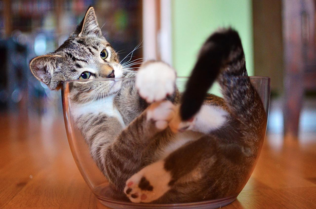Открытки, смотреть прикольные картинки кошек