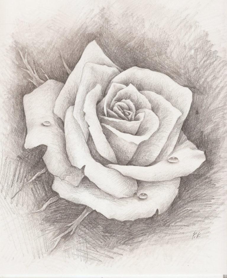 Рисунок красивые розы