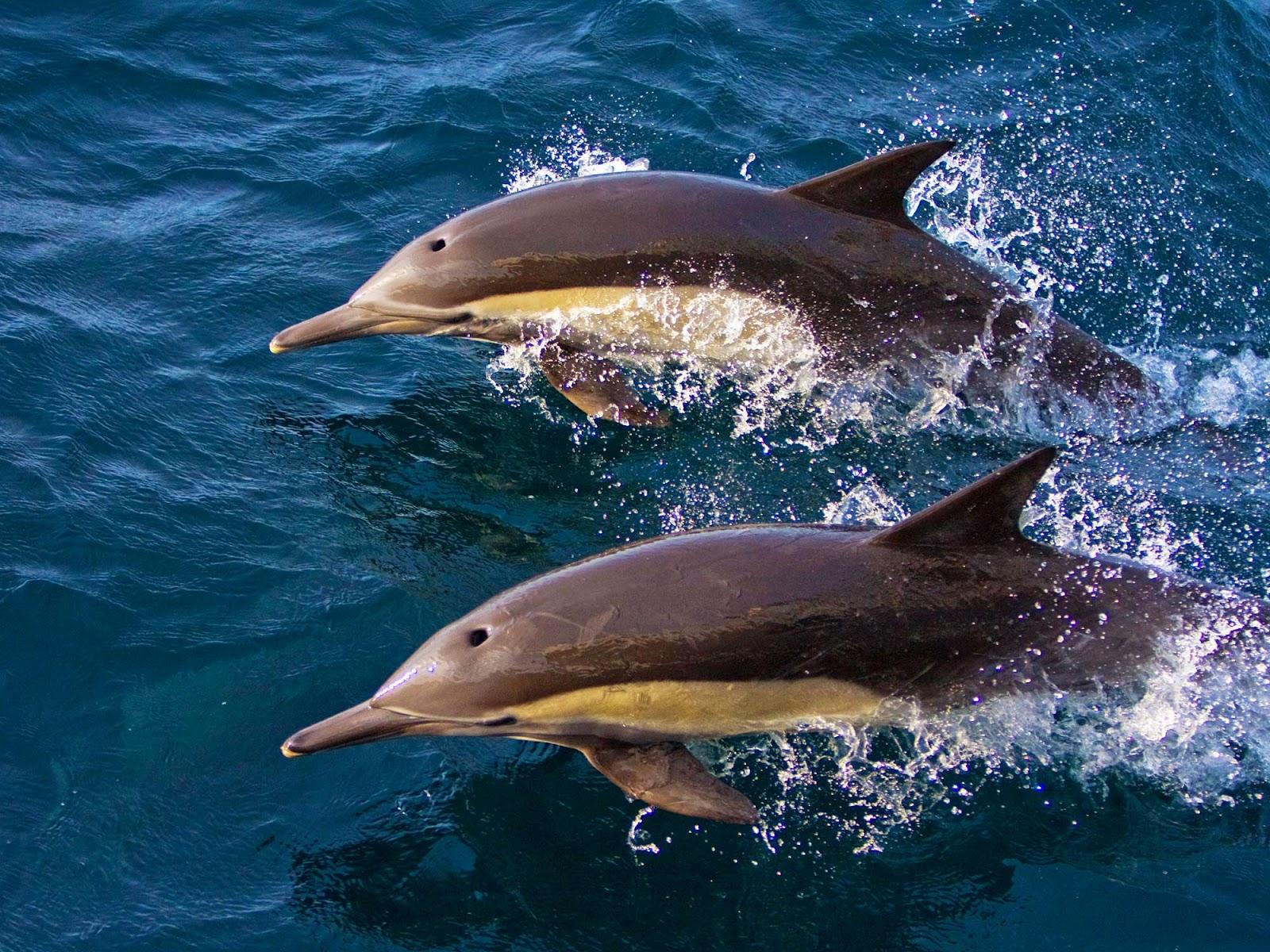 шар дельфин все картинки цивилизации давным давно