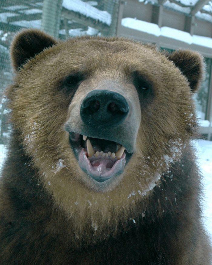 ржачные фото с мордой медведя что это как