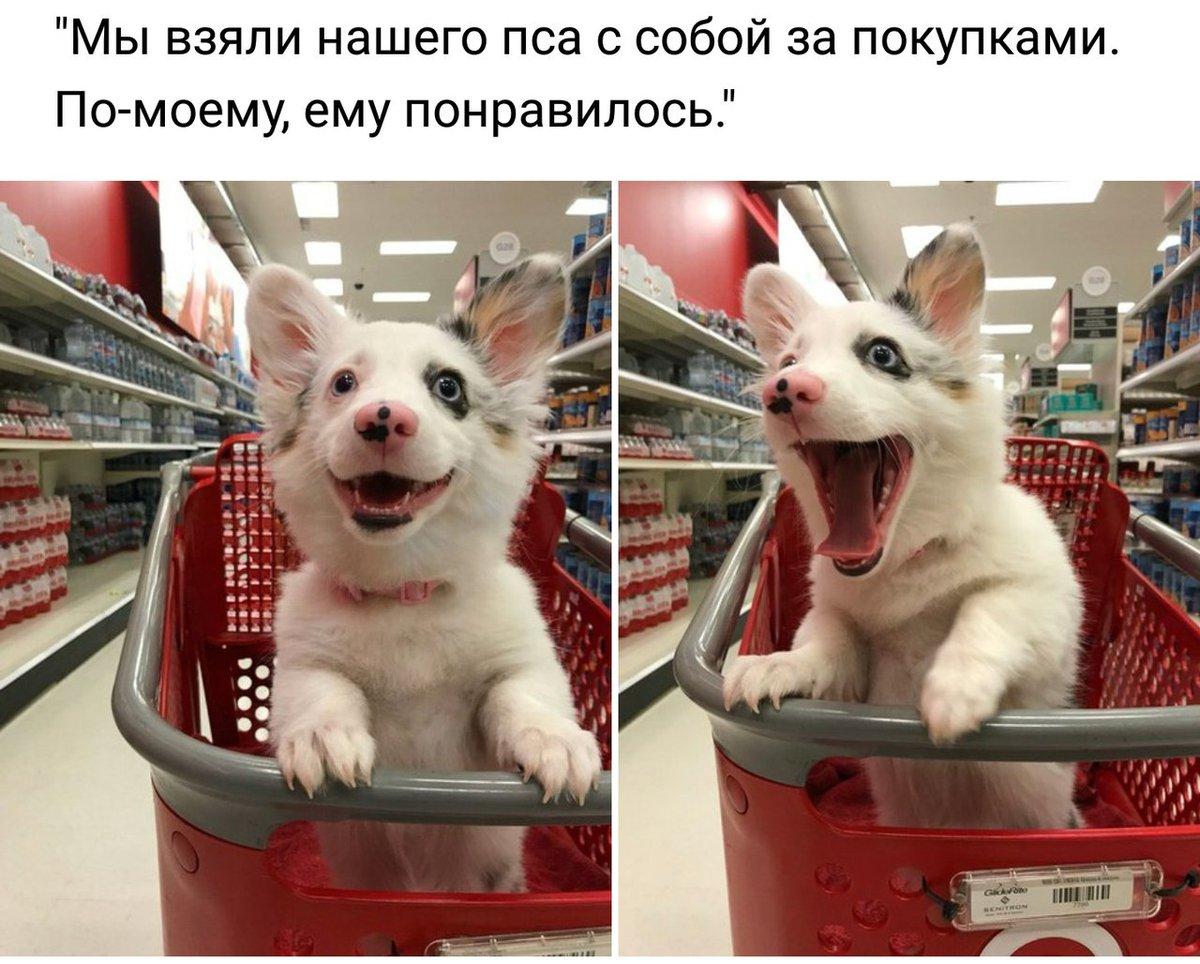 Фото смешные животные с надписями 2018