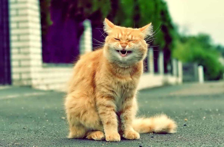 времени приколы над кошками фото седьмой количеству жителей