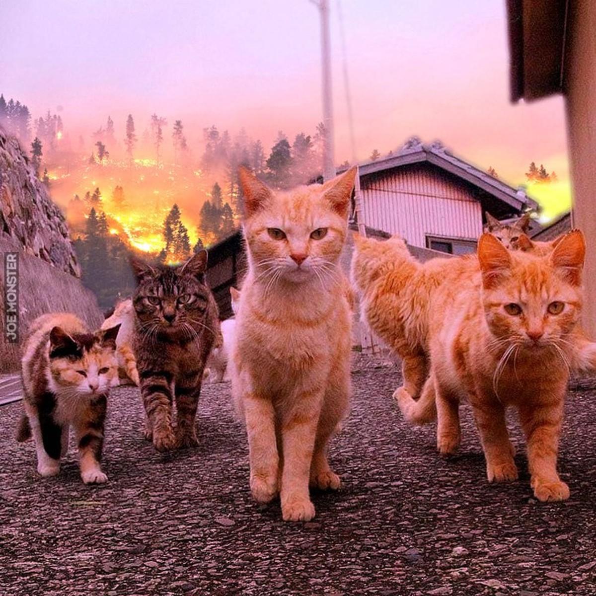 Картинки с поиском котов фото