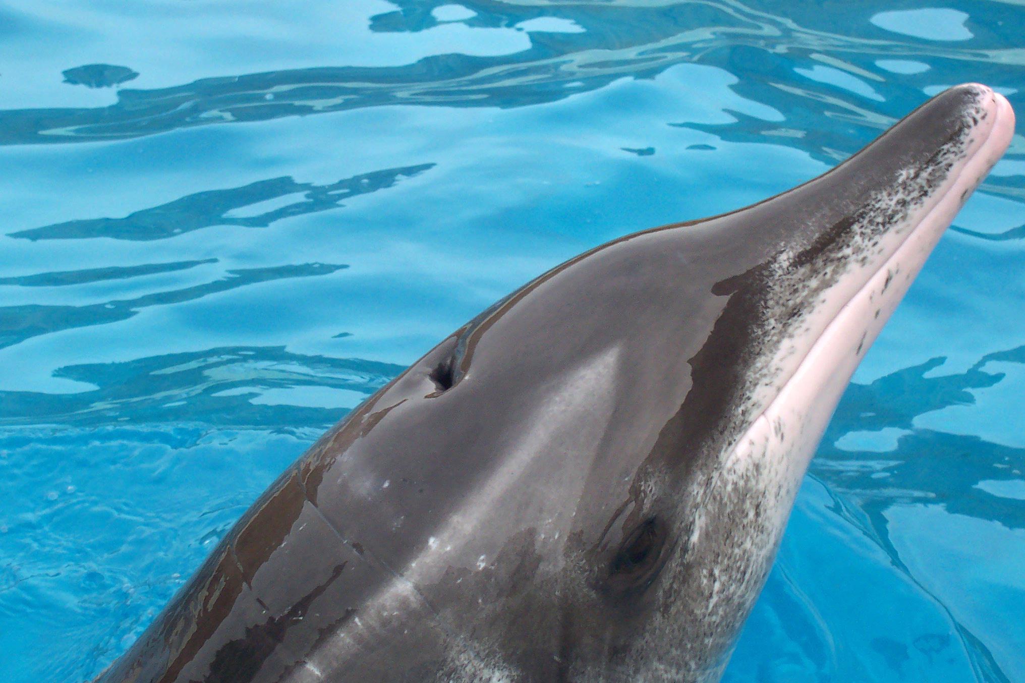 наряд должен фото разновидности дельфинов позволяет снизить расходы