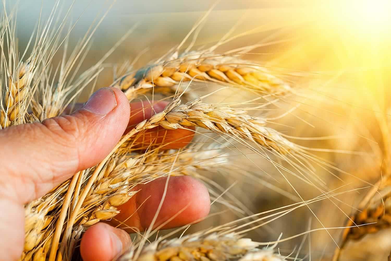 красивые картинки к дню сельского хозяйства радуга