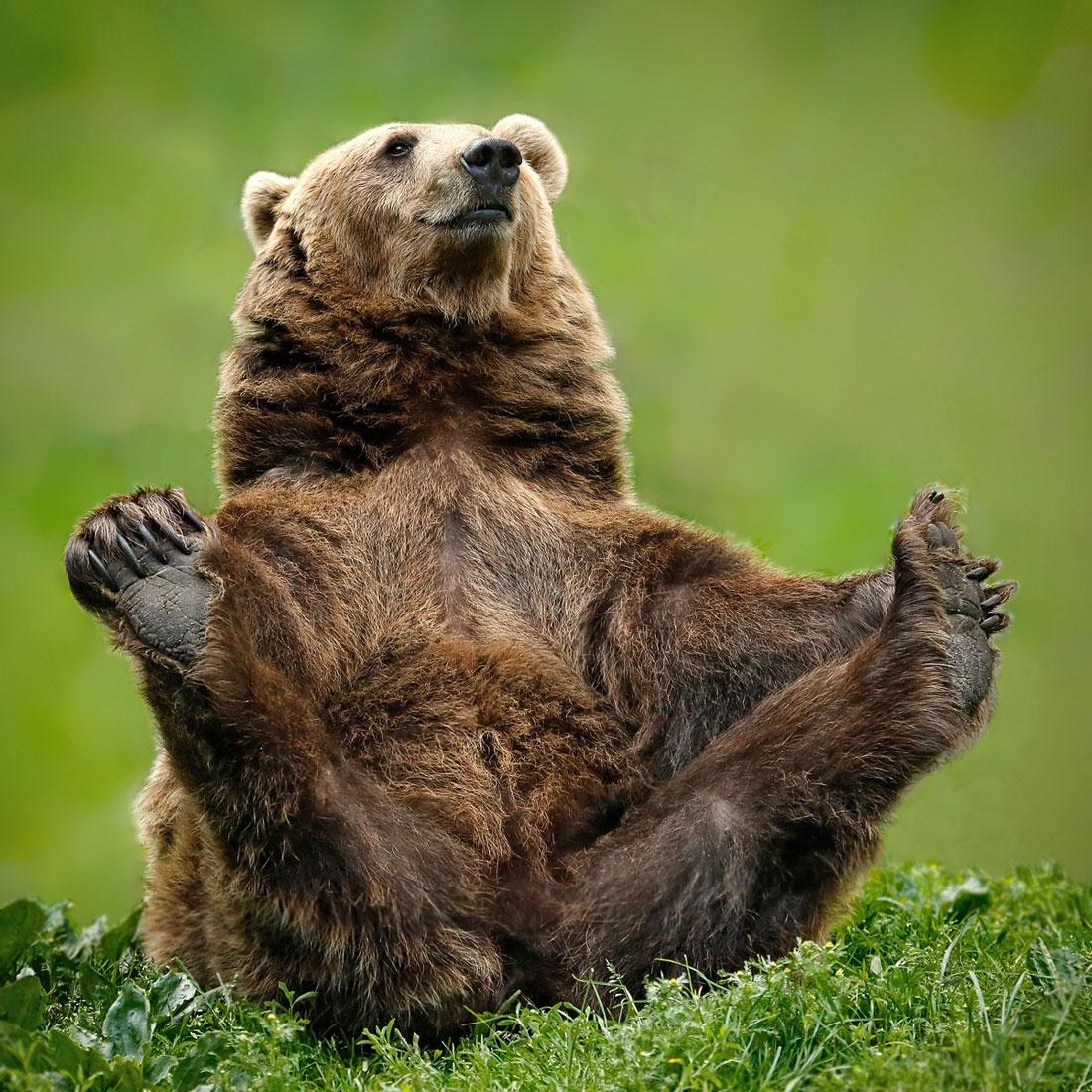 Открытки для, очень смешной медведь картинки